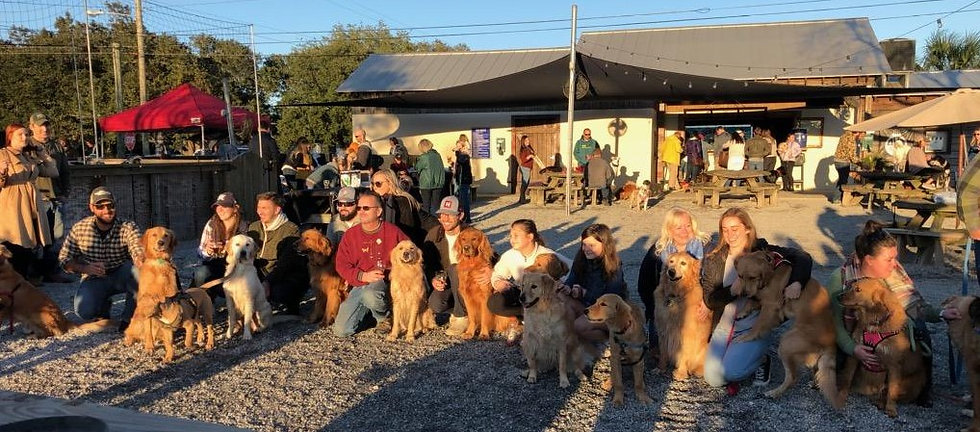 Gathering of Goldens and owners at GGR event