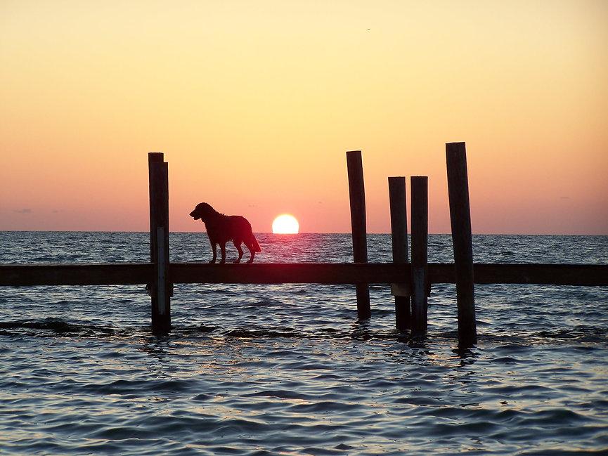 Golden Retriever on dock at sunset