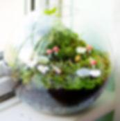 terrarium dubai, creative terrarium dubai,