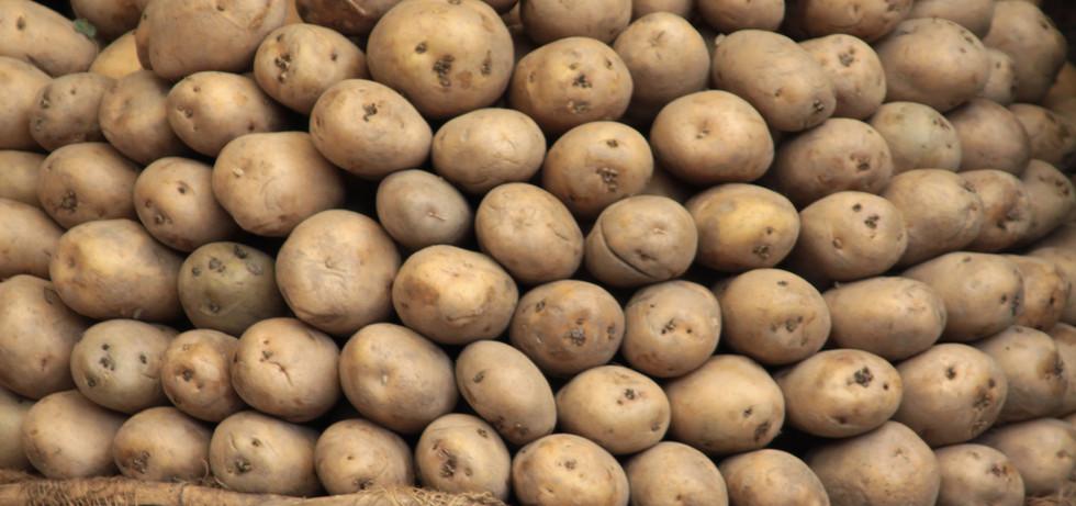 Russet Potato Pile