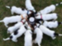circle of pups 300dpi.jpg