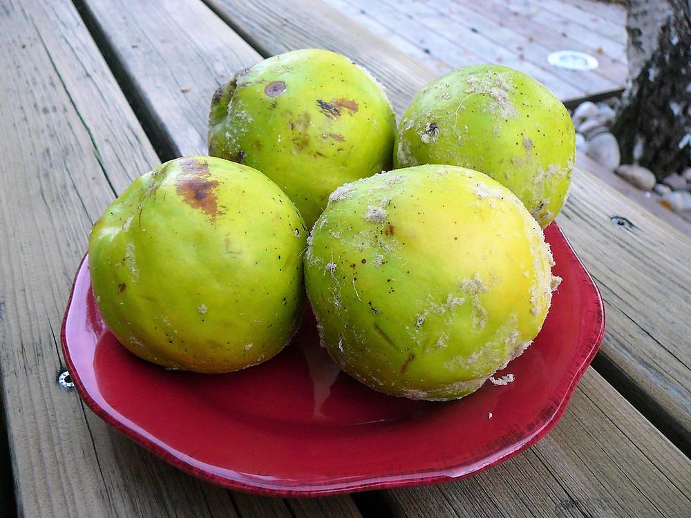 Mangez des fruits de saison, mais que faire avec des coings quand on a n'y envie de gelée ou de pâte...bourrées de sucre !