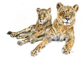 Madoda and Zambezi