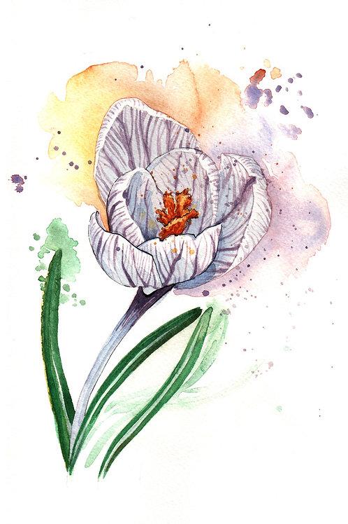 'Crocus' Original Watercolour