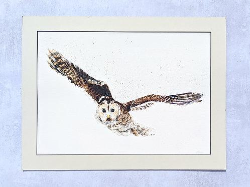 'Amethyst' Tawny Owl Limited Edition Print