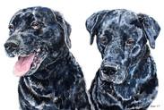 Sam and Bailey