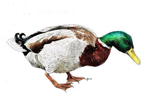 'Duck Down' Original Painting