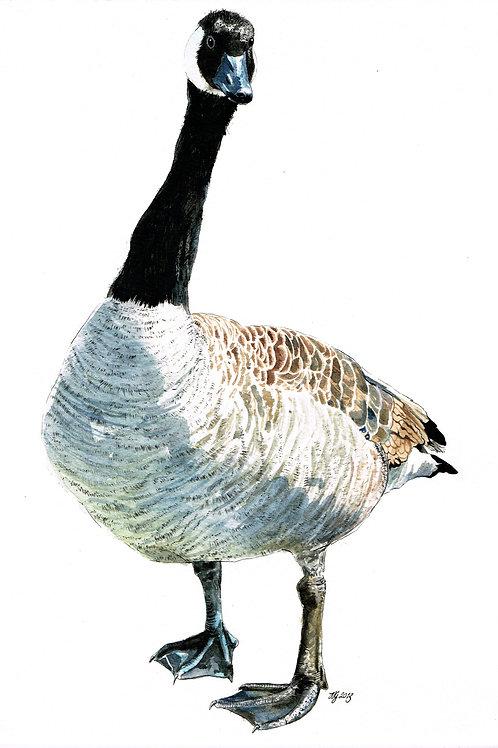 'Canadian Goose' Original Painting