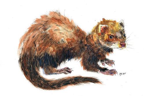 'Polecat' Original Painting