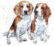 beaglessmaller.jpg