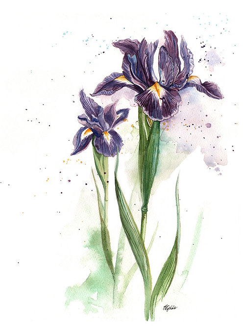 'Irises' Original Watercolour Painting