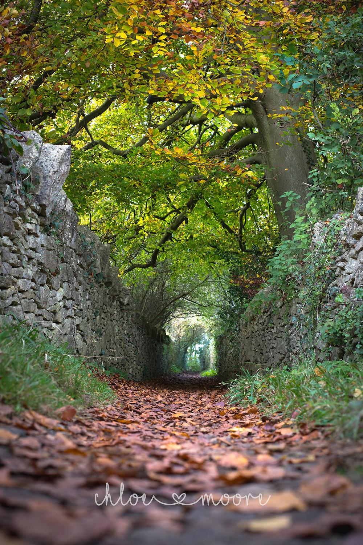 City of Bath, England. Skyline Walk. Autumn Path. Activities for children, summer holidays