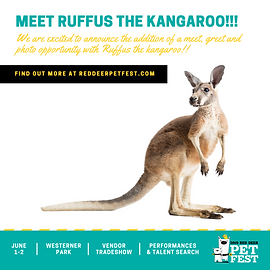 PET FEST 2019 - Square - KANGAROO - 001