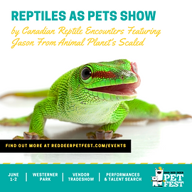 PET FEST 2019 - Square - Reptile - 001.p