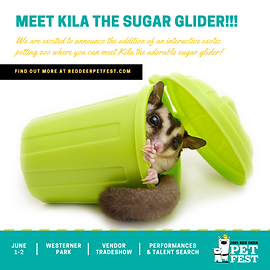 PET FEST 2019 - Square - Sugar Glider -