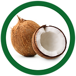 coconuts_edited.png