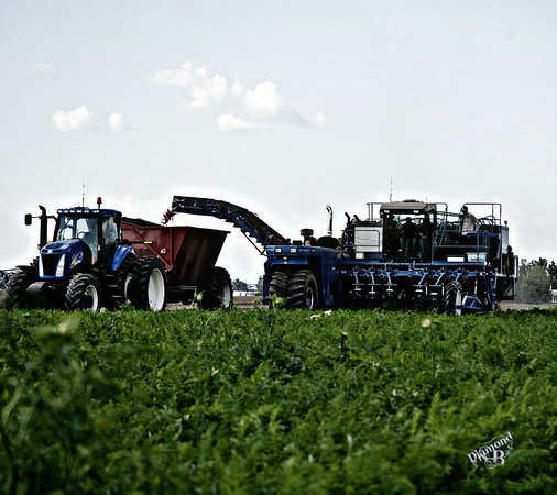 harvesting3-M.jpg