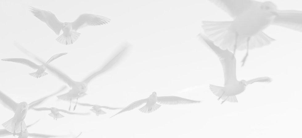 Seagulls_edited_edited.jpg