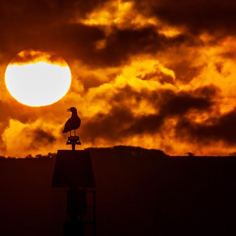 Portstewart sunrise