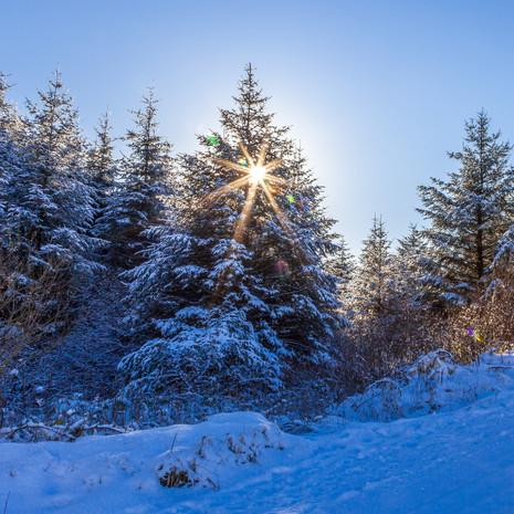 Sunburst & Snow