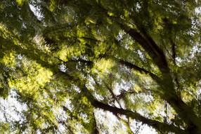 Loundscape attraversa i boschi di Parco Nord Milano