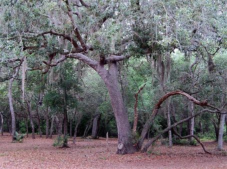 mount dora lakefront land for sale