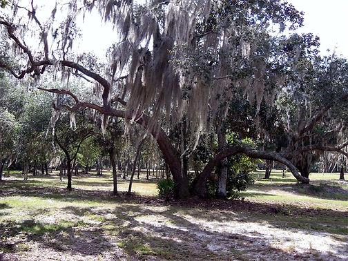 fruiland park florida lakefrnt land for sale