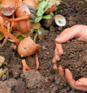 Understanding what can be used for composting is important for a waste management plan