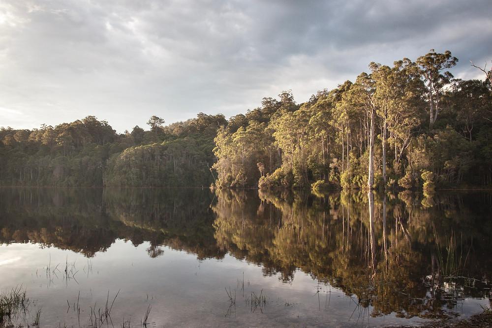 Pieman Lake