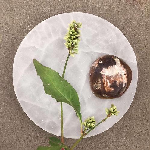 Petrified wood, förstenat trä är en fin sten för dig som vill arbeta med att komma i kontakt med dina tidigare liv.