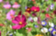 flower-meadow-3598566_640.jpg