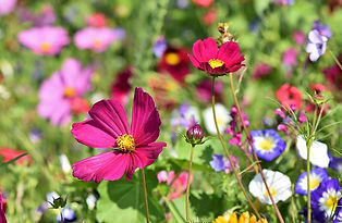 flower-meadow-3598566_640.jpg