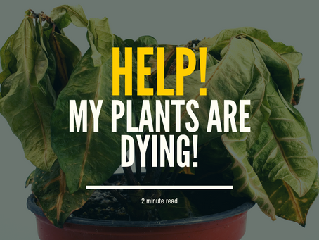 Help! My plants are dying.
