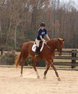 Whippoorwill Farm - Horse Training