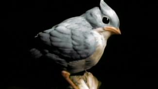 "Start Card ""Birds"""