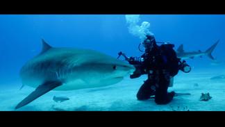 Shark Stewards PSA