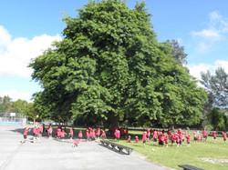 As strong as an Oak tree!