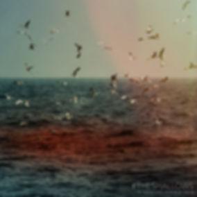 1467847360-TheShallows_SharkSighting_MSD