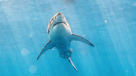 1467850786-shallows-shark-carousel.jpg