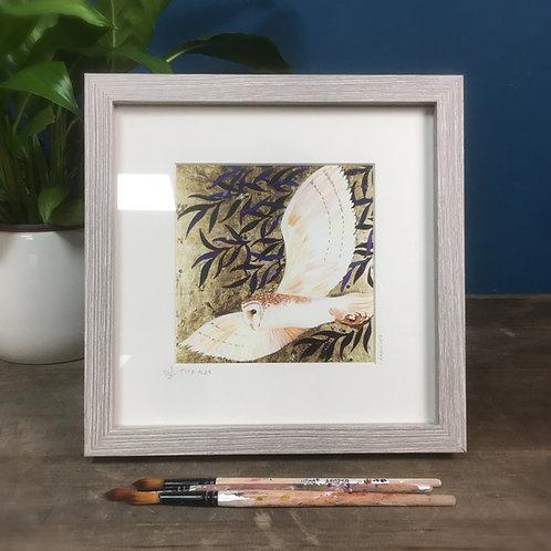 Tyto Alba, Barn Owl, framed boxed print