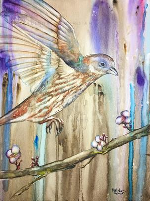"""Colorful Bird"""