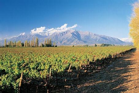 56-404095-vineyard.jpg