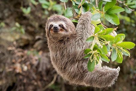 sloth-selfie-final.jpg