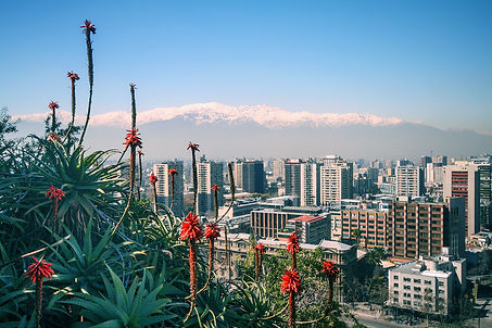 view-of-the-andes-plants-and-city-from-s