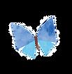 蝶々3.png