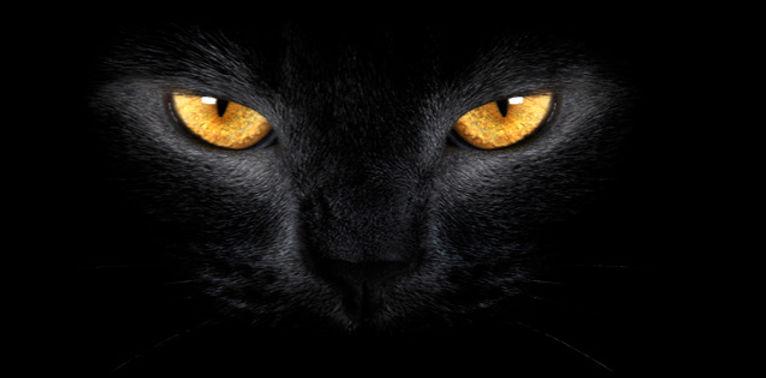 capa para Facebook Gato preto visao_edit