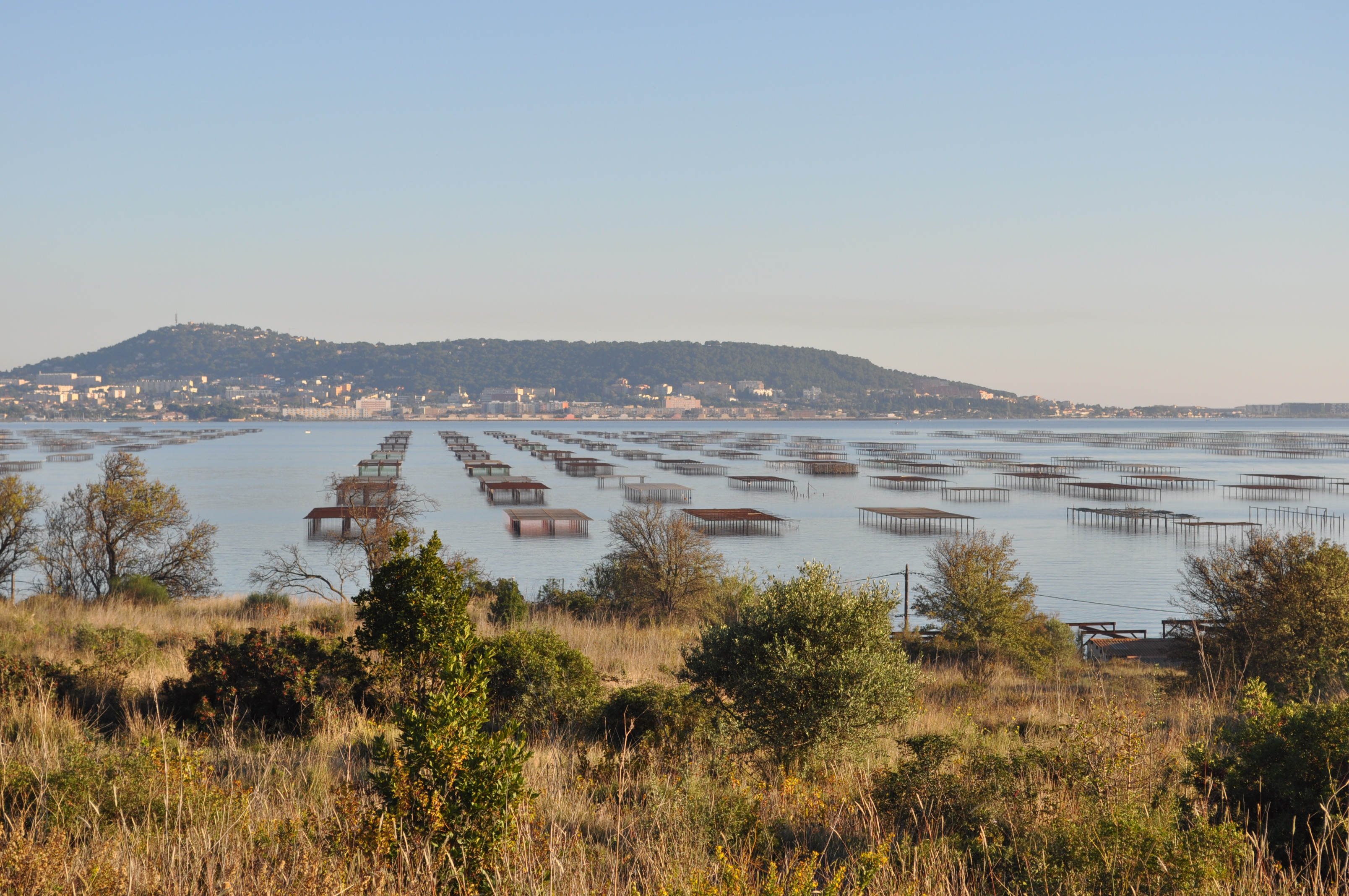 L'étang de Thau