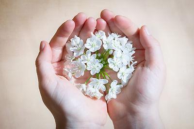flower-blossom-bloom-white-161552.jpeg