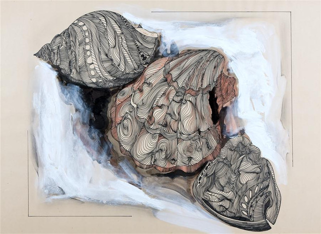 Shells (Contour Drawing) I