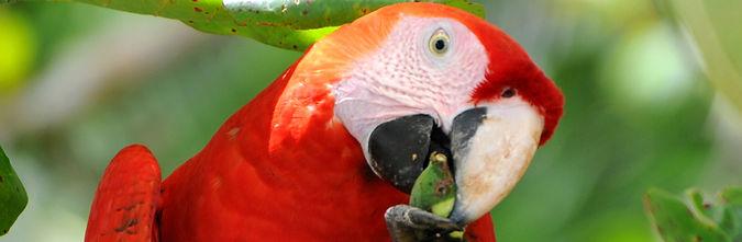 Scarlet Macaw brochure.jpg